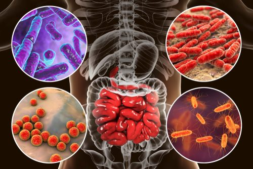 How Having a Healthy Gut Can Lead to a Healthy Body